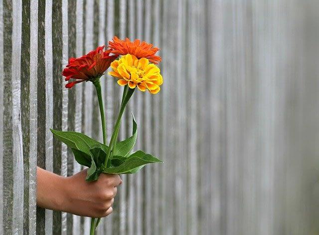 Buket blomster ragt gennem stakit